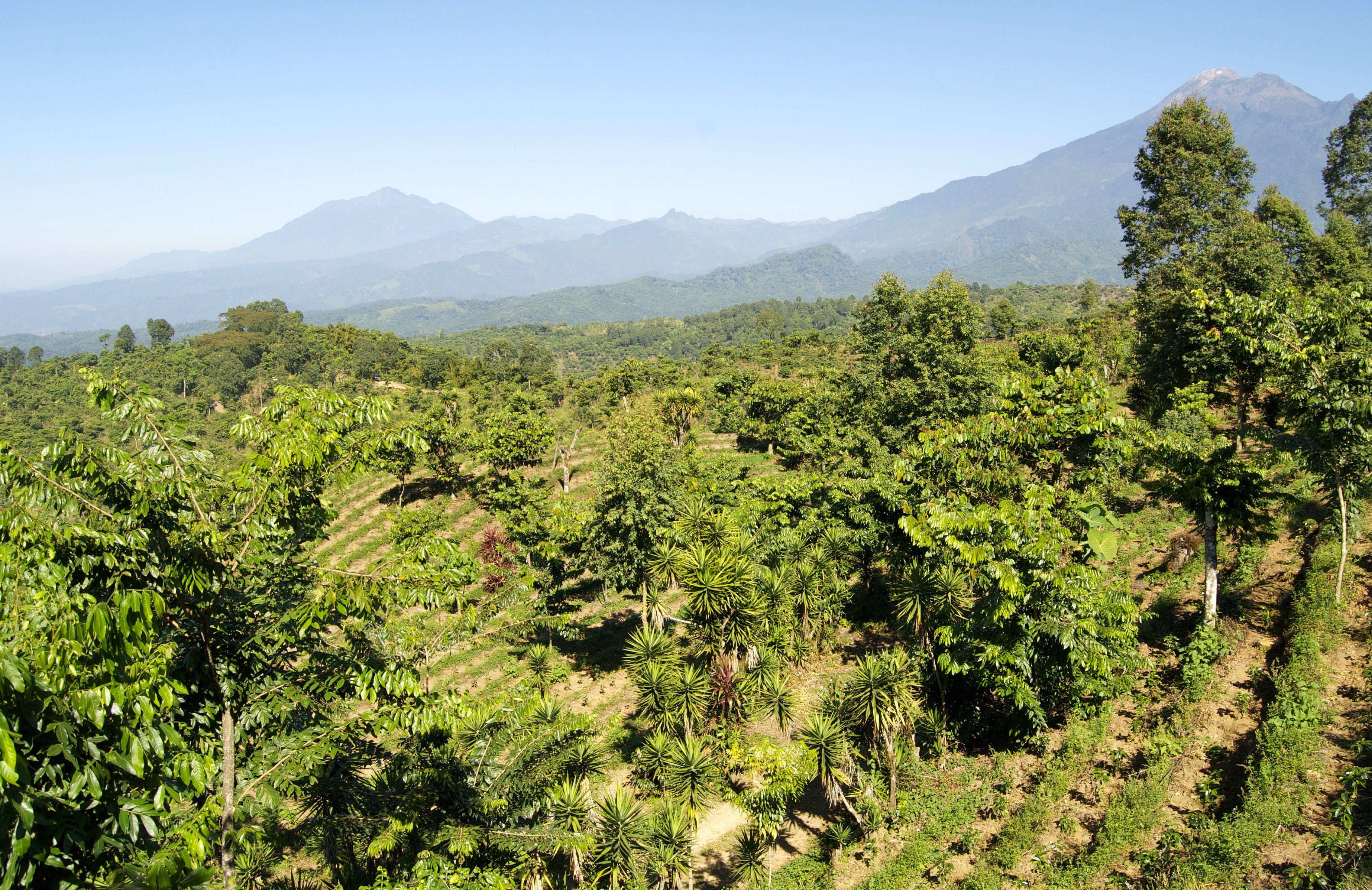 guatemala-times