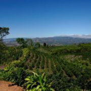 optxhirunf226201610419_10728382-stunning-agricultural-landscape-across-sa