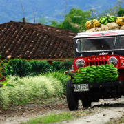 triangulo-del-cafe-willys-coffee-region-colombia