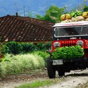 triangulo-del-cafe-willys-coffee-region-colombia