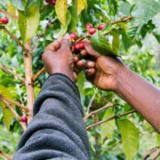 our-work_where-we-work_africa_kenya_hero2